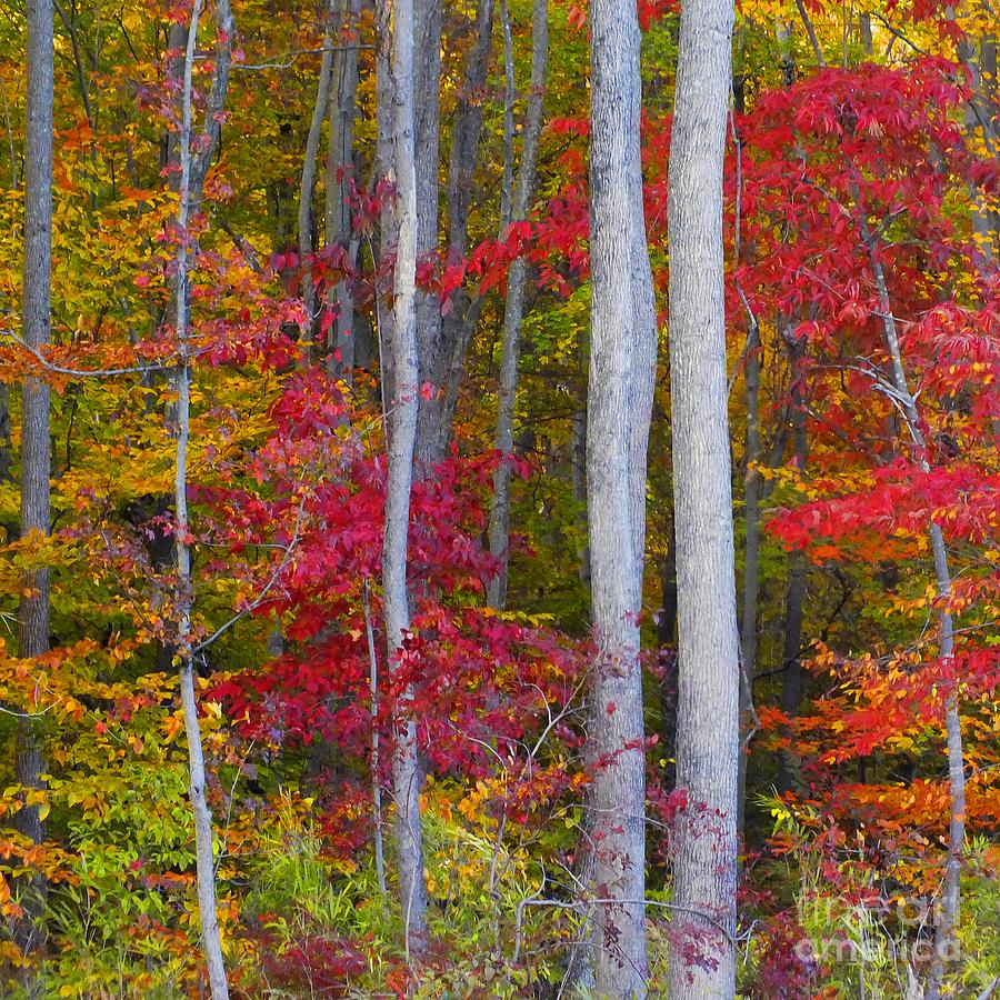 Autumn Leaves Photograph - Colorful Fall Forest by Scott Cameron