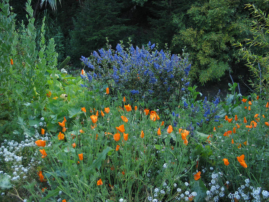 Landscape Photograph - Colorful Flowers Along The Trail by Phyllis Tarlow