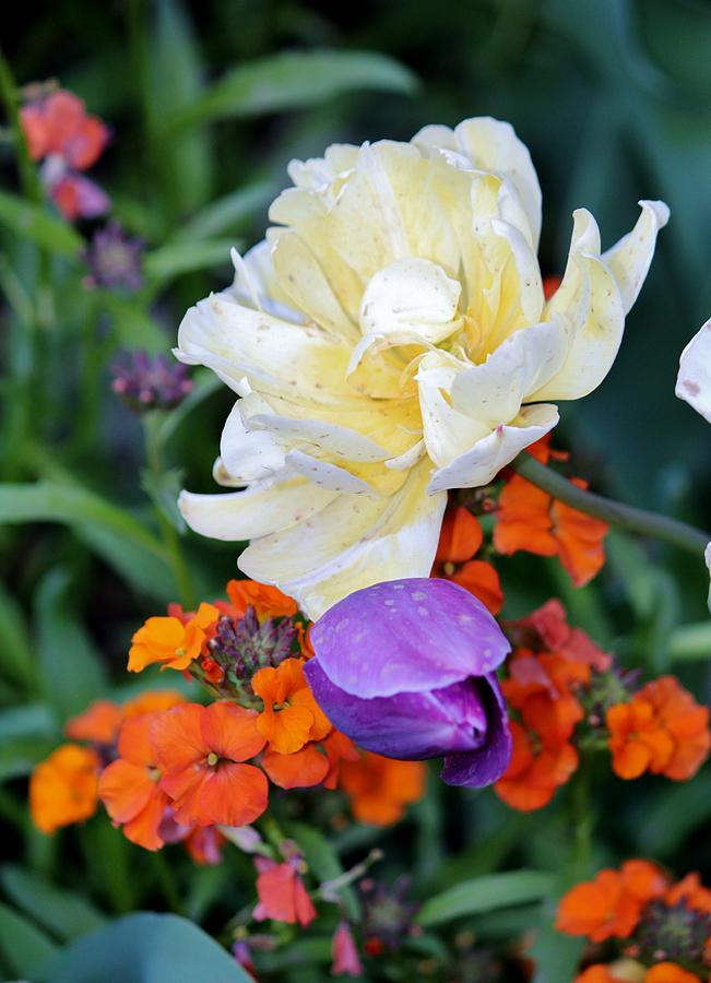 Colors Photograph - Colorful Flowers by Cynthia Guinn