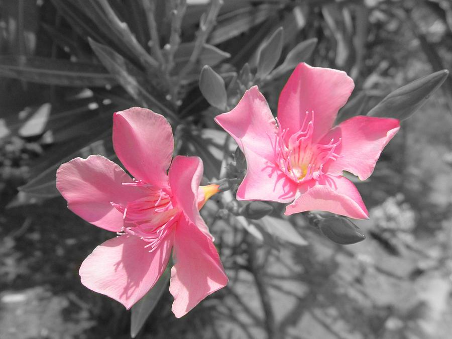 Nature Photograph - Colorful Flowers by Vinayak Patukale
