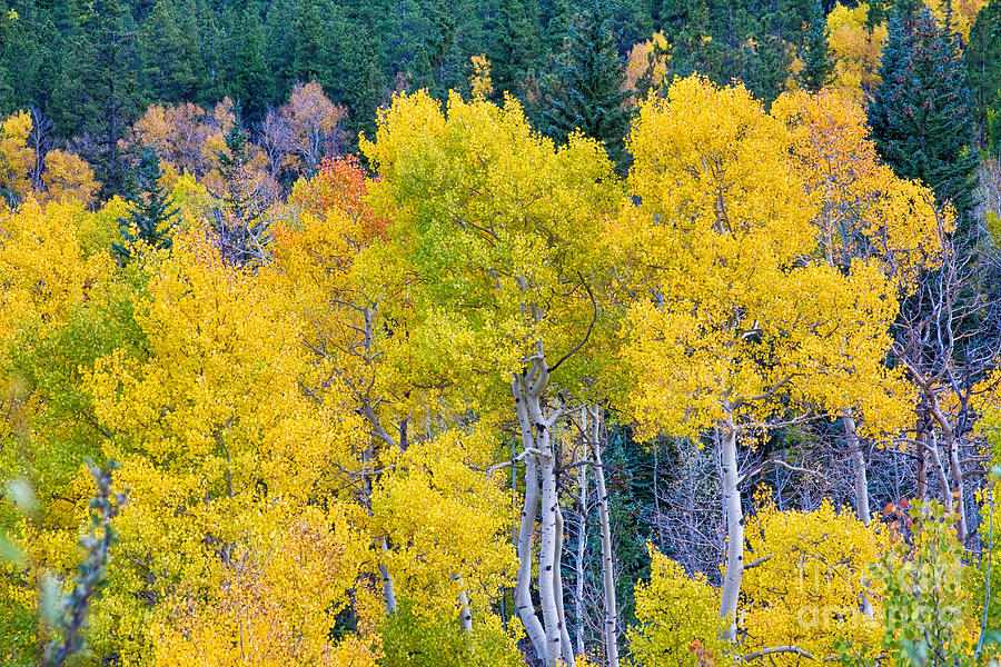 Autumn Photograph - Colorful Forest by James BO  Insogna