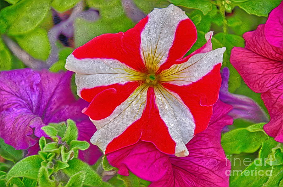 Colorful Photograph - Colorful Garden Flower by George Paris
