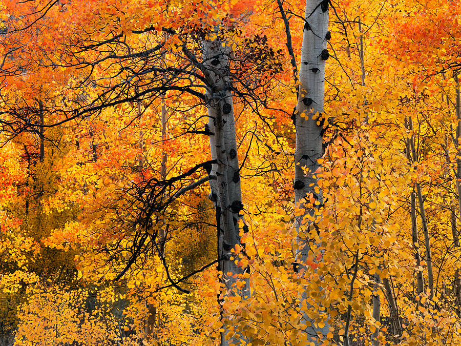 Aspen Forest Photograph - Colorful Glow by Leland D Howard