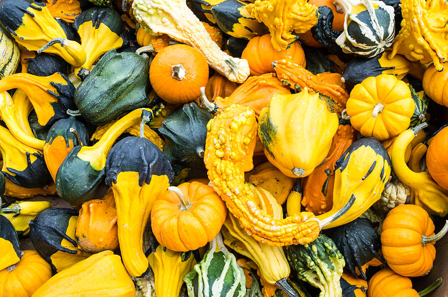 Agriculture Photograph - Colorful Gourds  by John Trax