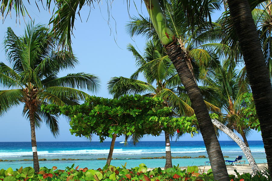 Barbados Photograph - Colorful Greens And Blues by Catie Canetti