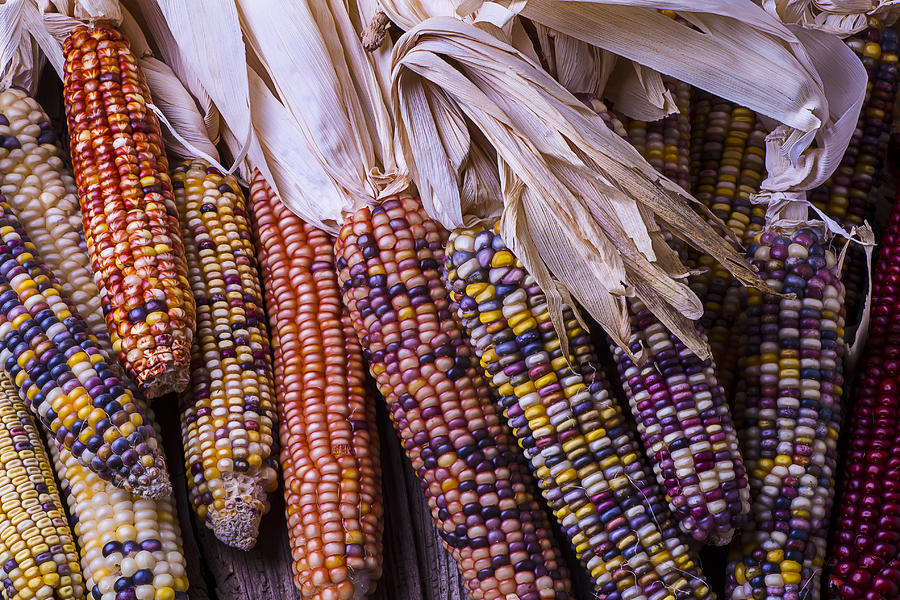 Colorful Photograph - Colorful Indian Corn by Garry Gay