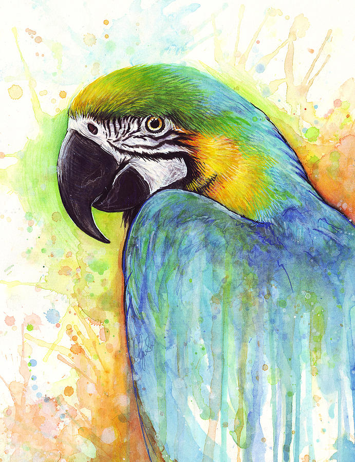 Watercolor Painting Painting - Macaw Painting by Olga Shvartsur