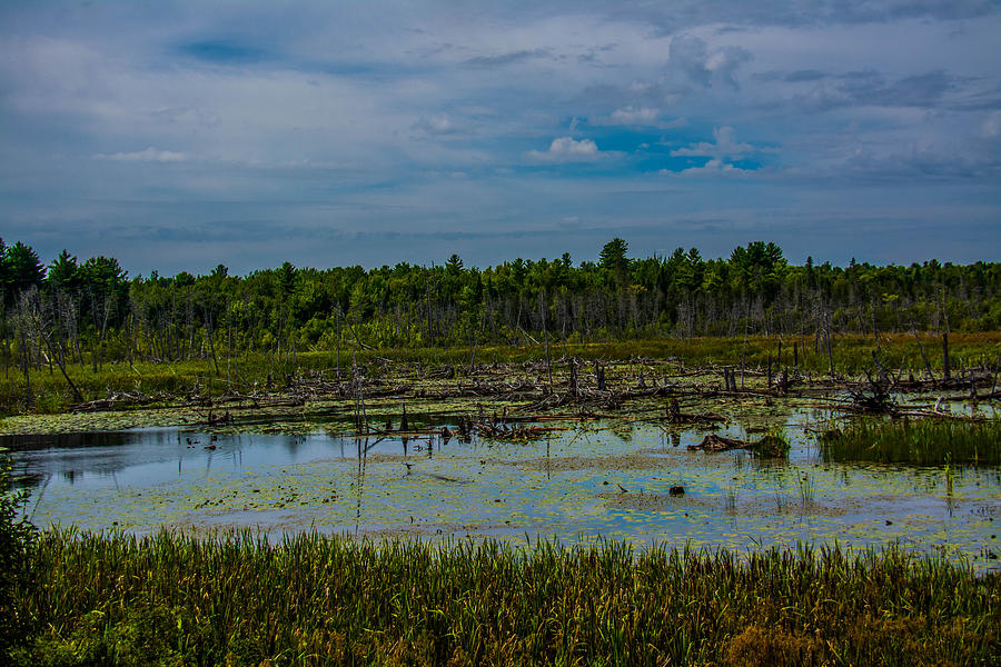 Marsh Photograph - Colorful Marsh by Jason Brow