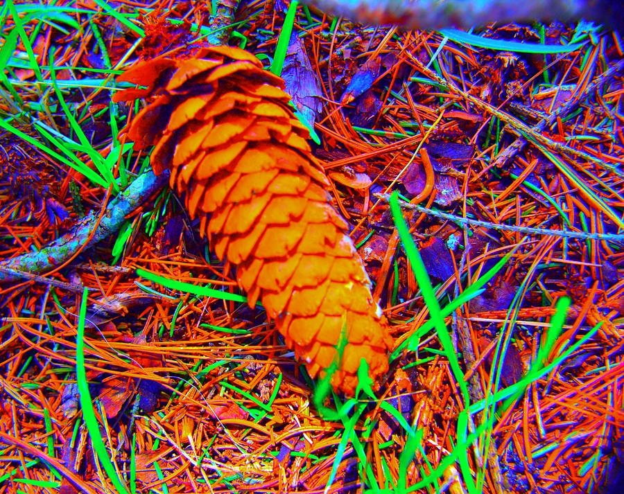Pinecone Photograph - Colorful Pinecone by Michael Sokalski