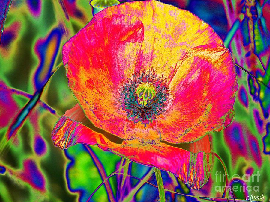 Poppy Digital Art - Colorful Poppy by Carol Lynch