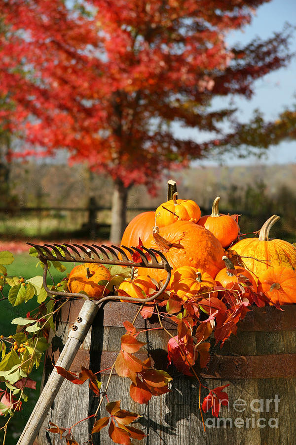 Agriculture Photograph - Colorful Pumpkins And Gourds by Sandra Cunningham