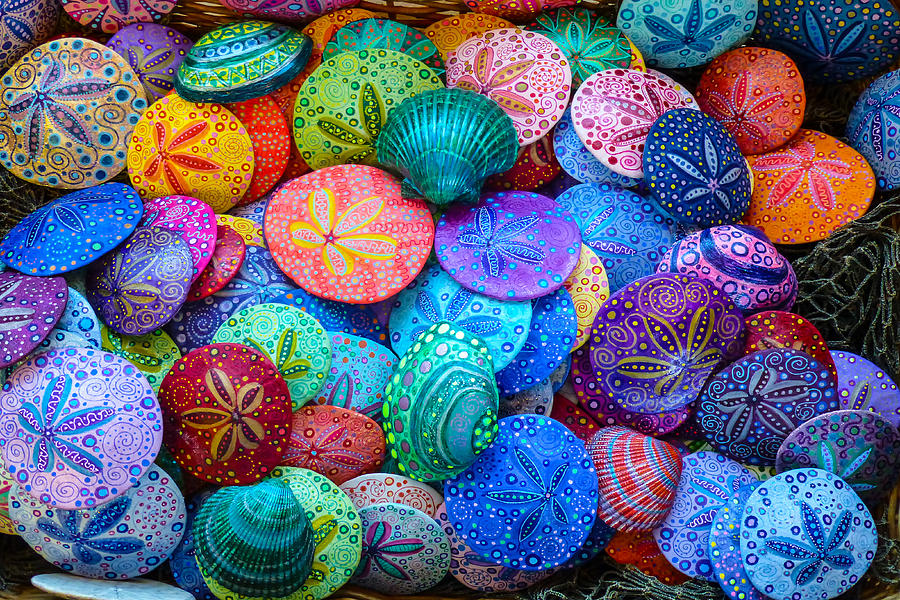 Colorful Sand Dollars Photograph By George Herbert