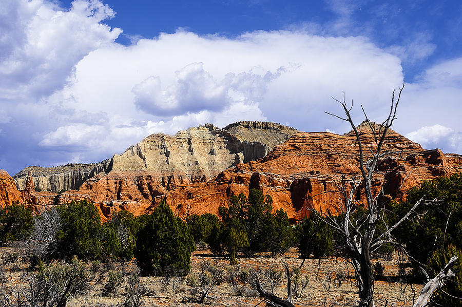 Black Photograph - Colorful Southwest by Don and Bonnie Fink