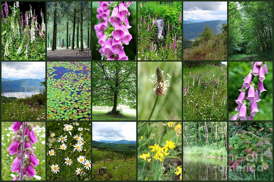 Colorful Western Washington Collage Photograph