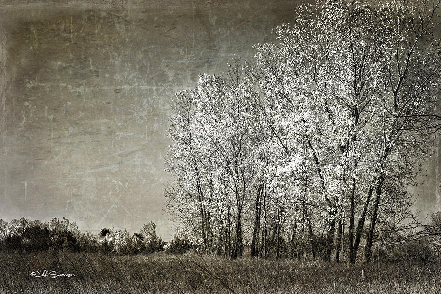 Autumn Photograph - Colorless Fall by Jeff Swanson