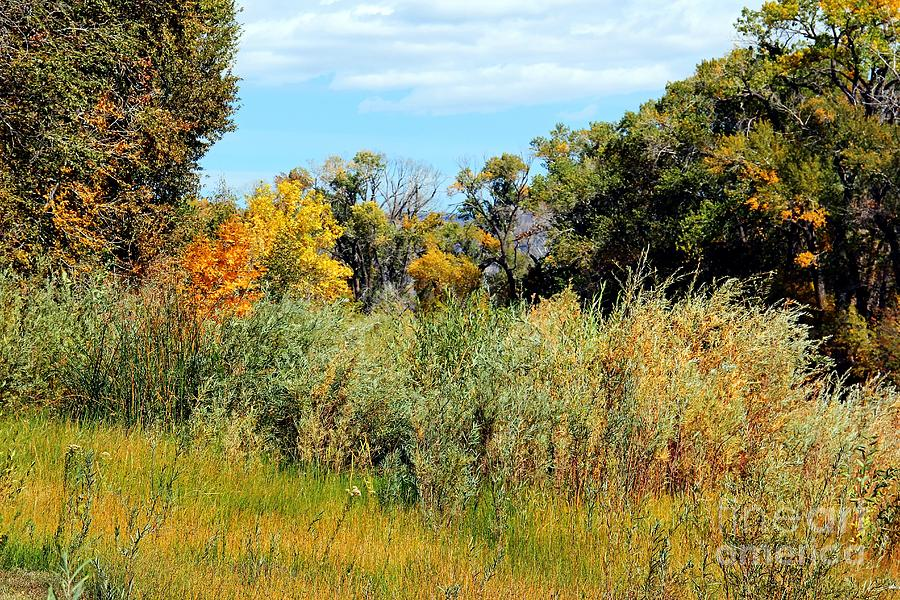 Scenic Photograph - Colors Along The Gunnison by Bob Hislop