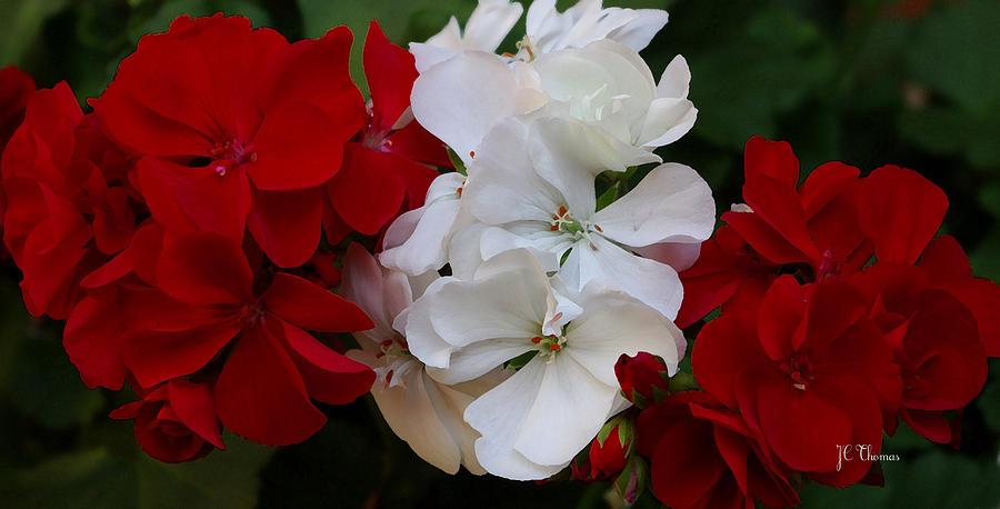 Colors Photograph - Colors Of Flowers by James C Thomas