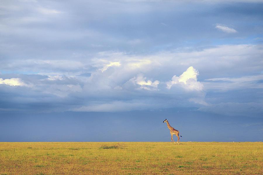 Giraffe Photograph - Colors Of Freedom by Eiji Itoyama