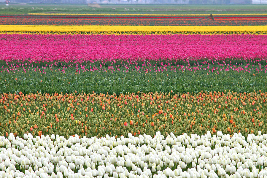 Colorful Photograph - Colors Of Holland by Lars Ruecker