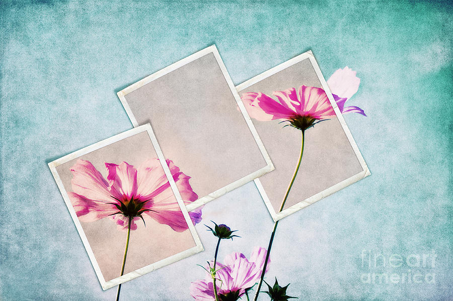 Cosmea Photograph - Colors Of Nature by Angela Doelling AD DESIGN Photo and PhotoArt