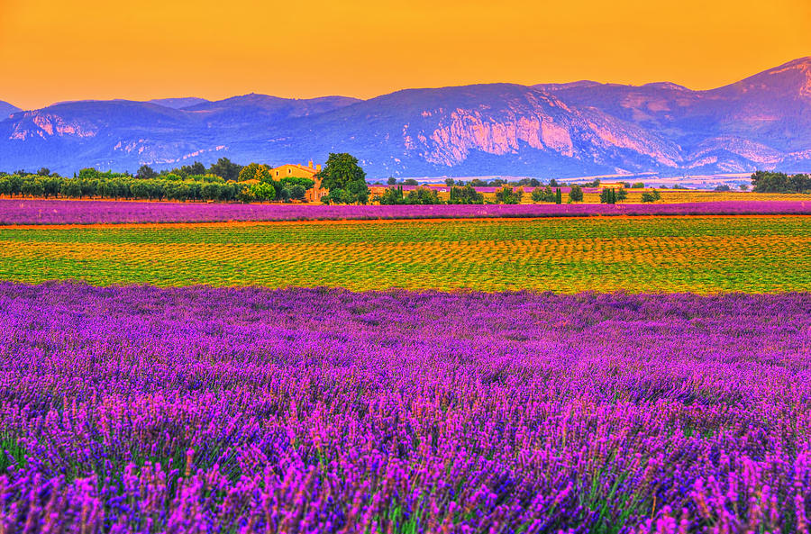 Provence Photograph - Colors Of Provence by Midori Chan