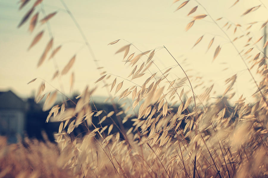 Nature Photograph - Colors Of The Wind by Zapista Zapista