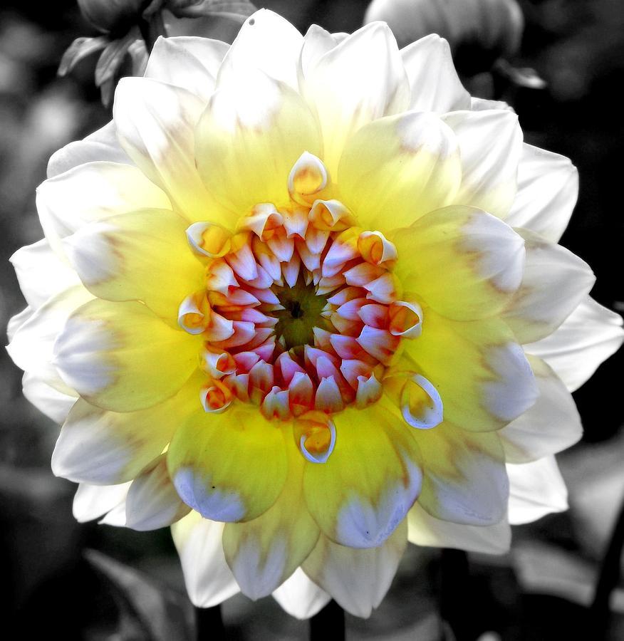 Flowers Photograph - Colorwheel by Karen Wiles