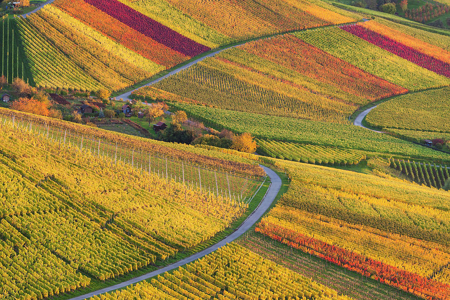 Coloured Vineyards In Stuttgart, Germany Photograph by Werner Dieterich