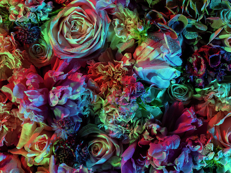 Colourful And Vibrant Floral Photograph by Jonathan Knowles
