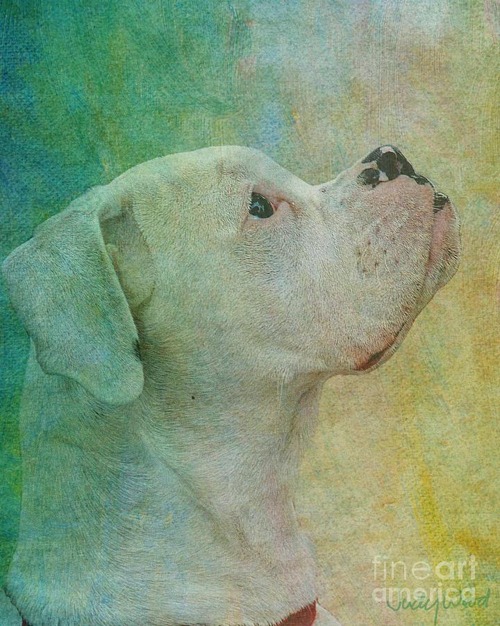 Dog Digital Art - Colours by Judy Wood