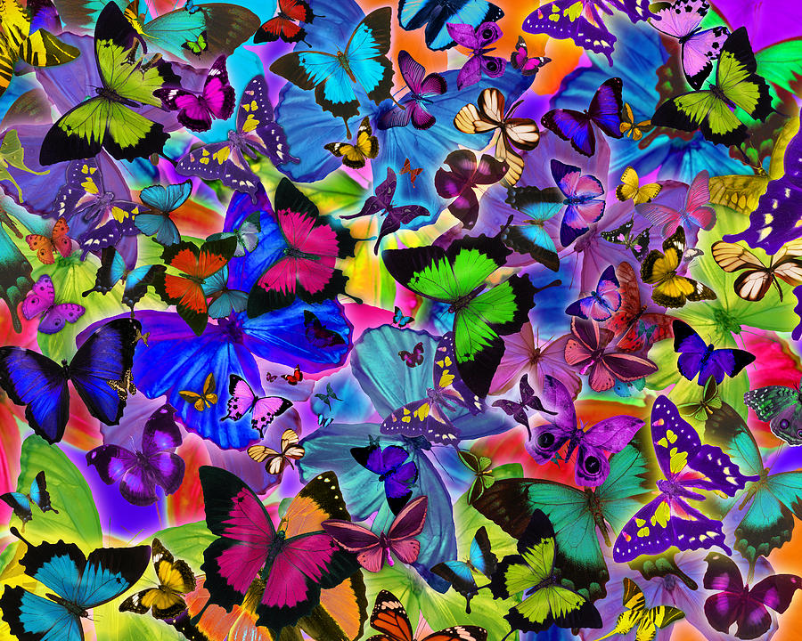 Alixandra Mullins Photograph - Colours Of Butterflies by Alixandra Mullins