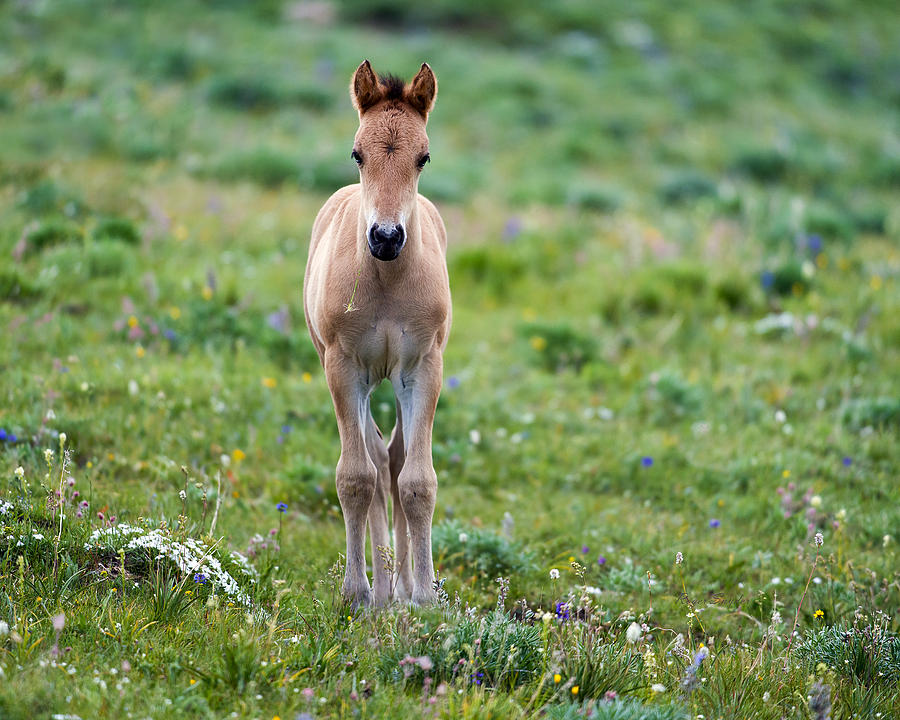 Beautiful Photograph - Colt Mustang 1 by Roger Snyder