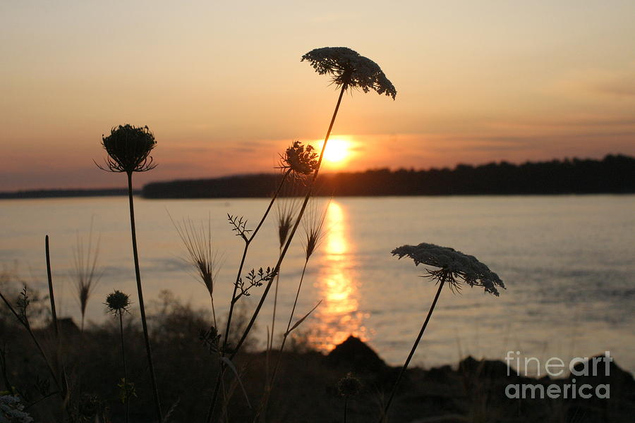 Queen Anne's Lace Photograph - Columbia Gorge Sunset by Cari Gesch