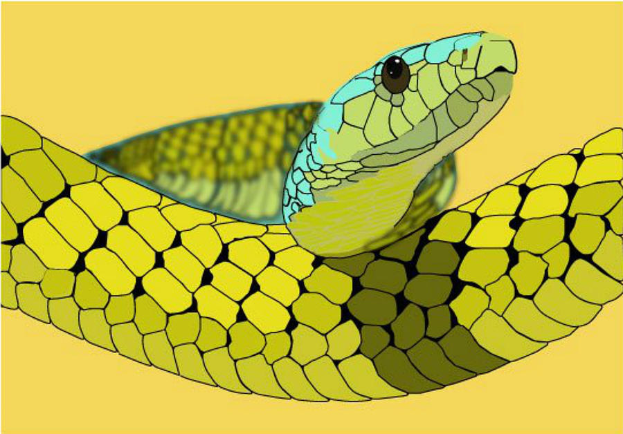 Columbian Snake Digital Art by Katelyn Sherman