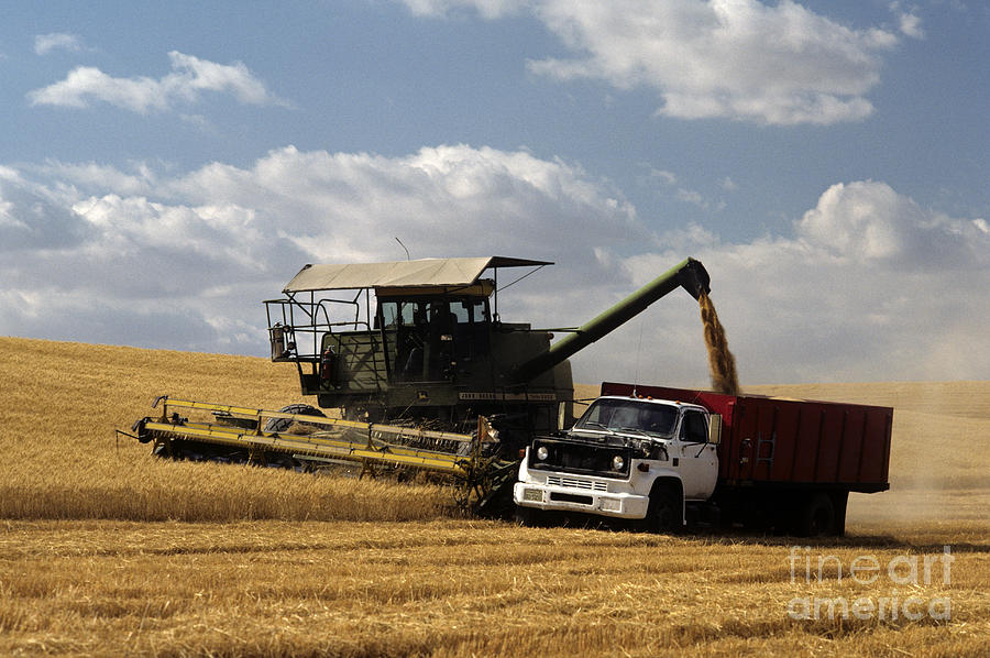 Combine And Truck In Wheat Field Photograph