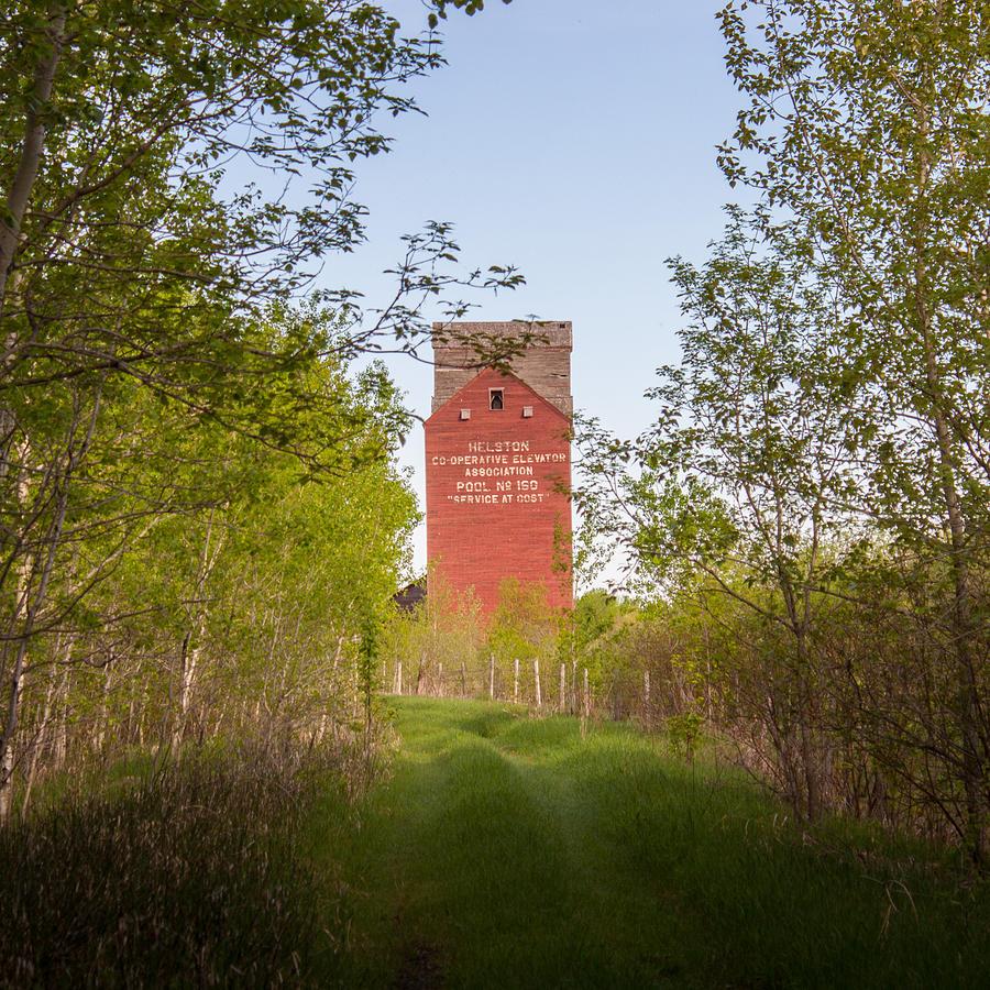 Grain Elevator Photograph - Grain Elevator In Corridor Of Trees by Steve Boyko