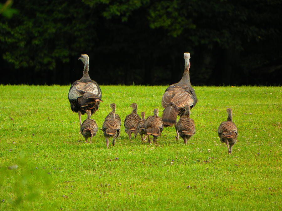 Turkey Photograph - Come On Kids by Jennifer Compton
