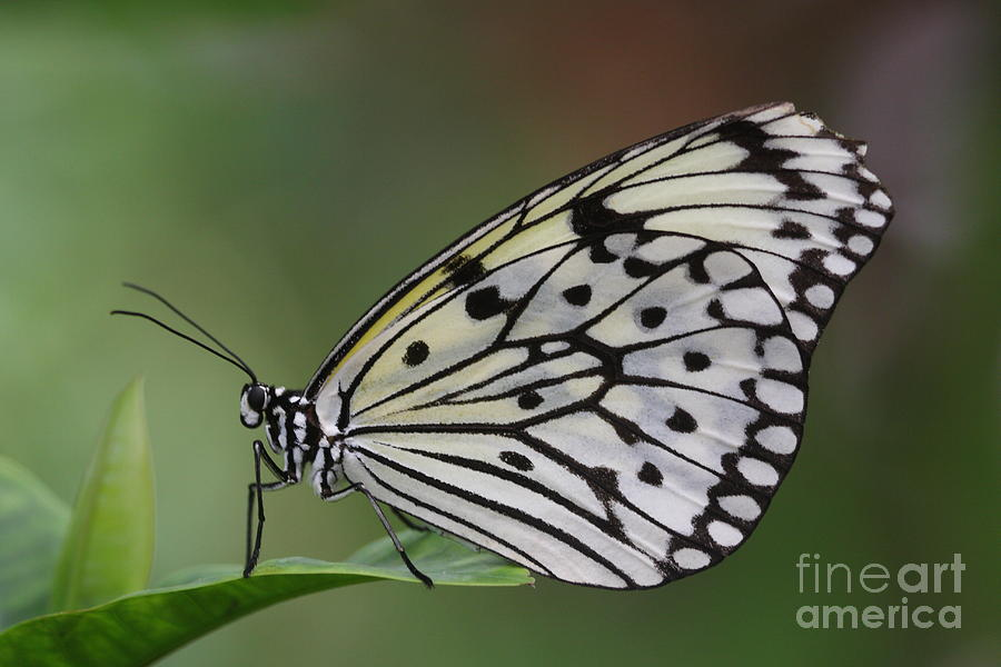 Paper Kite Photograph - Come Sit With A Paper Kite by Ruth Jolly