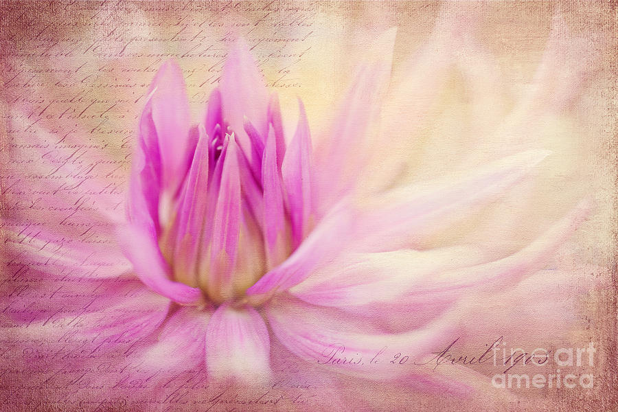 Dahlia Photograph - Come Spring by Beve Brown-Clark Photography