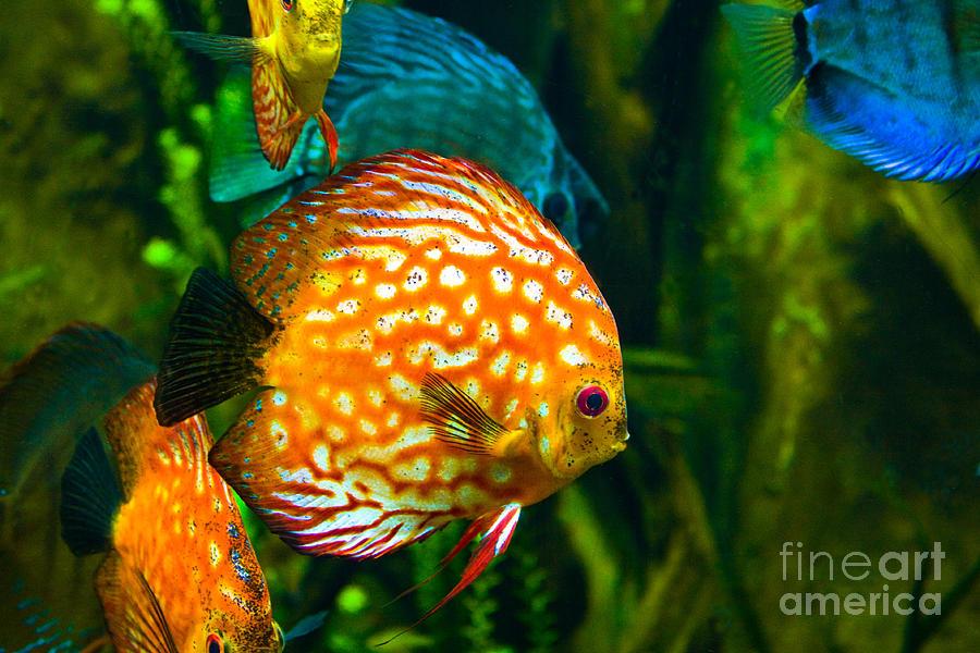 Sea Fish Photograph - Come Swim With Us  by Bob McGill