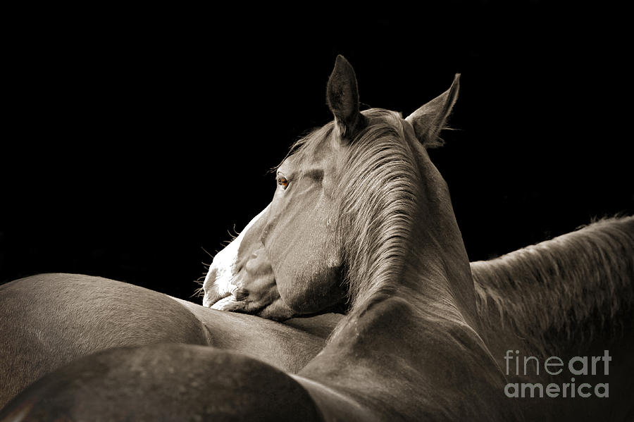Comfort by Michelle Twohig