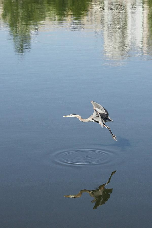 Photos Photograph - Coming In For A Landing by Ellen OReilly