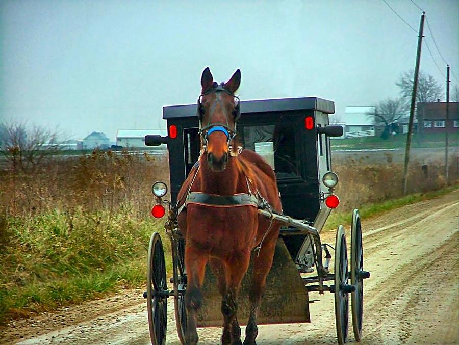 Amish Photograph - Coming My Way by Julie Dant