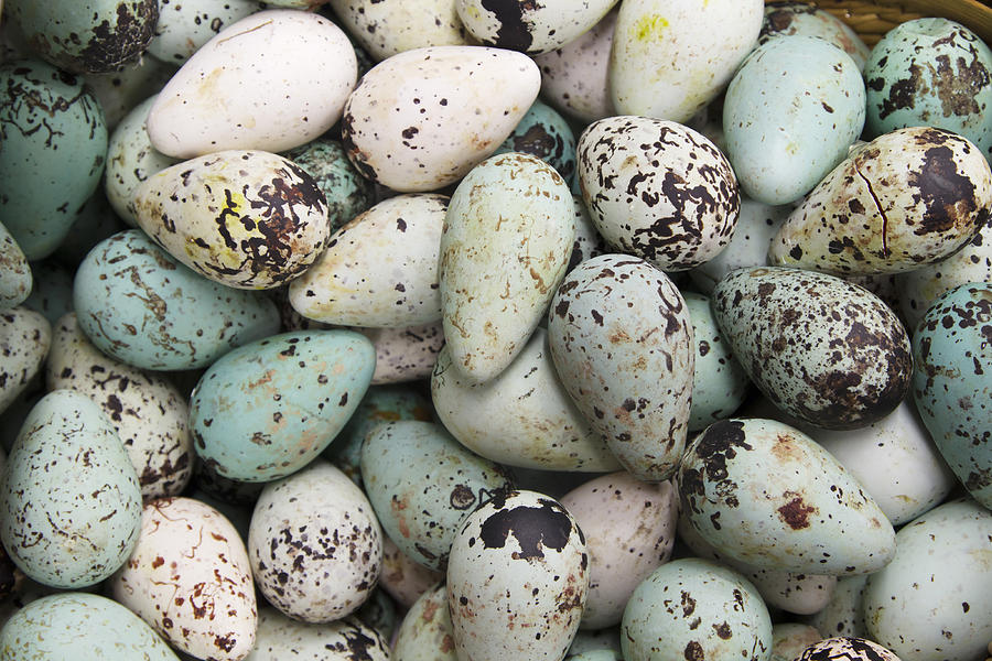 Common Guillemot Eggs Iceland Photograph by Bill Coster