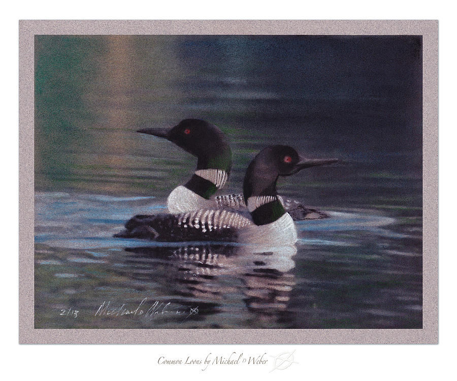 Swimming Drawing - Common Loons by Michael  Weber