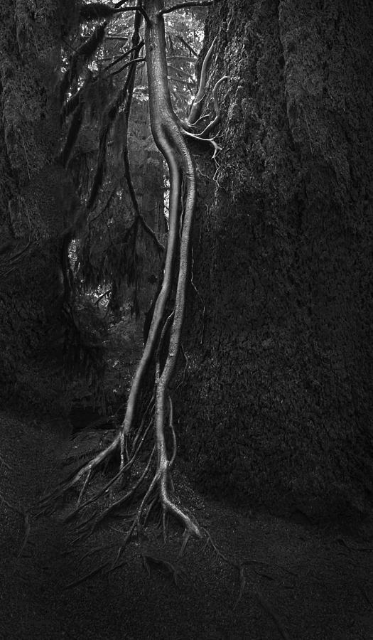 Companion Photograph - Companion by Naman Imagery