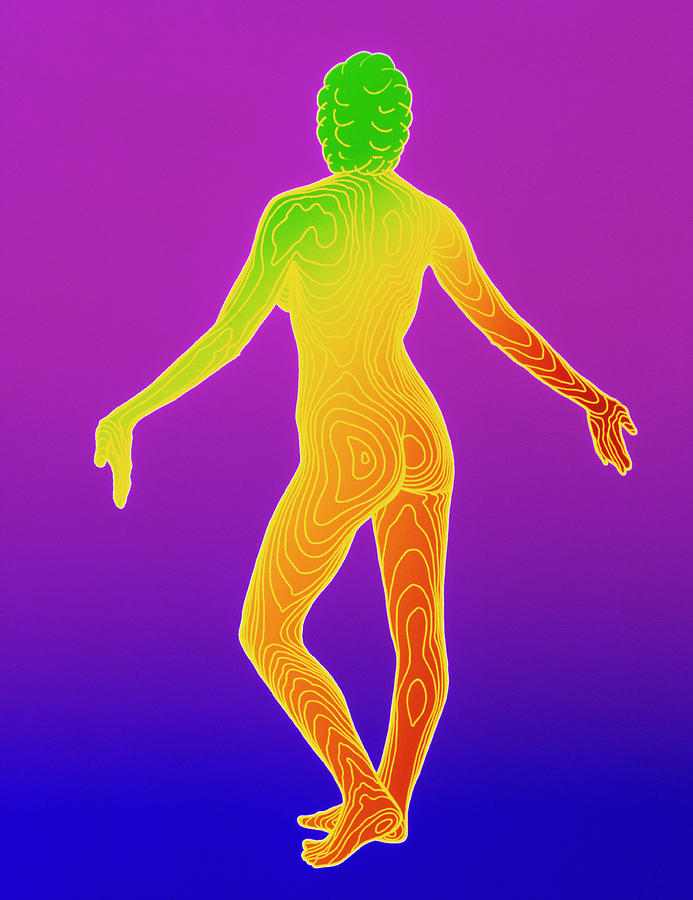 Body Photograph - Computer Contour Map Of A Female Body (back View) by Dr Robin Williams/science Photo Library