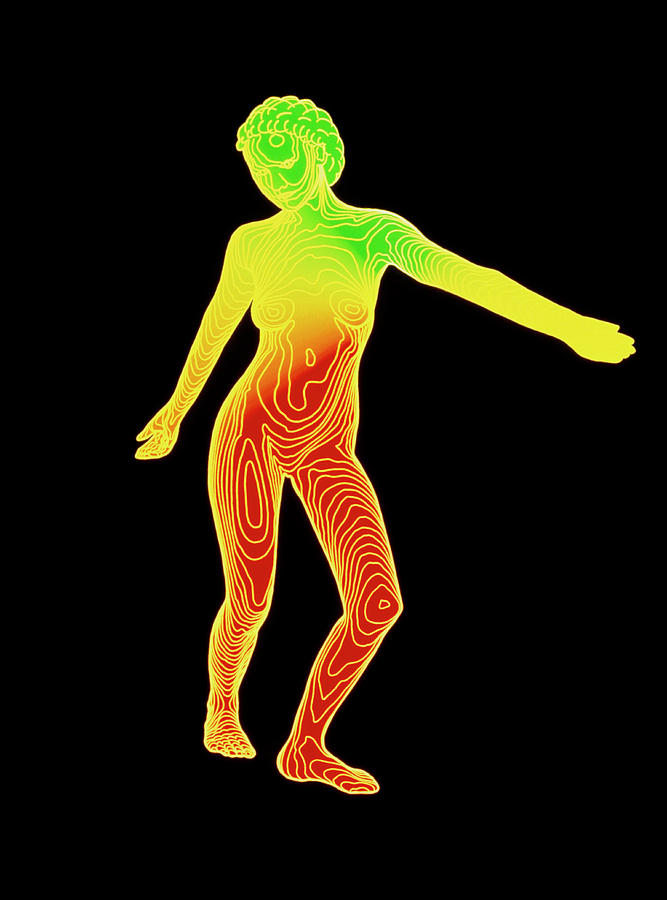 Computer Contour Map Of A Female Body (front View ...