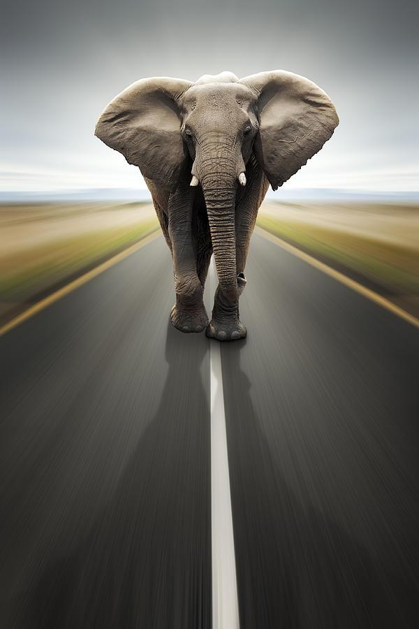 Elephant Photograph - Heavy duty transport / travel by road by Johan Swanepoel