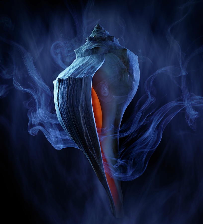 Conch Shell Photograph by Jack Andersen